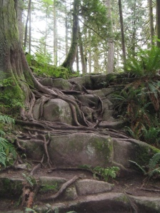 minnekhada, hiking, vancouver, west coast,