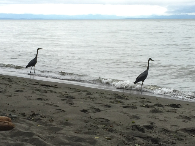 Graceful herons posing.